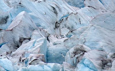 Dawes Glacier, Alaska. Flickr:Carolyn