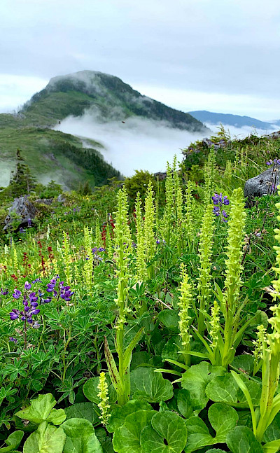 Flora in Tongass National Forest, Alaska. Flickr:Sheila Spores