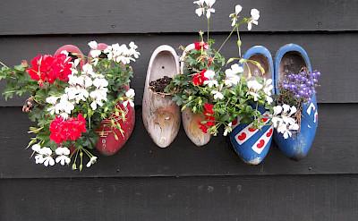 The famous Dutch <i>klompen</i> used as flowerpots in Zaandam. ©TO