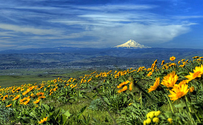 View of Mount Hood from Dalles, Columbia River Gorge. Flickr:fspnr
