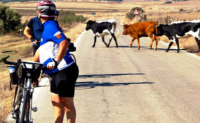Biking the White Villages of Andalusia Bike Tour in Spain. ©TO