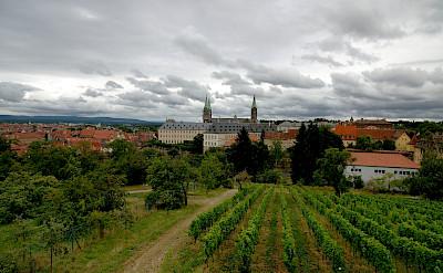 Vineyards in Würzburg, Bavaria, Germany. Flickr:Jin Palsong