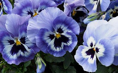 Flowers in Riedenburg, Germany. Flickr:Darius Zylka