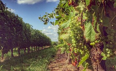 Biking along vineyards in Spain! Flickr:Pasco Olivier