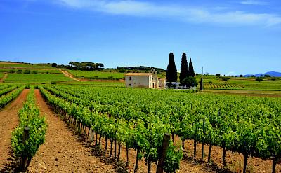 Wine estates in Catalonia, Costa Brava, Spain. Flickr:Angela Llop