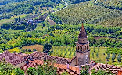 Vineyards & orchards in Motovun, Istria, Croatia. Flickr:Arnie Papp
