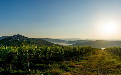 Biking along the vines in Motovun, Istria, Croatia. ©TO