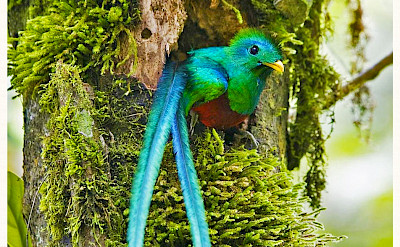 Quetzal bird in Monteverde Cloud Forest Reserve, Costa Rica. Photo via Flickr:Karl-Ludwig Poggemann