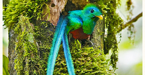 Quetzal bird in Monteverde Cloud Forest Reserve, Costa Rica. Photo via Flickr:Karl-Ludwig Poggemann 10.303097, -84.788017