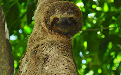 Spot diverse wildlife as you walk Costa Rica