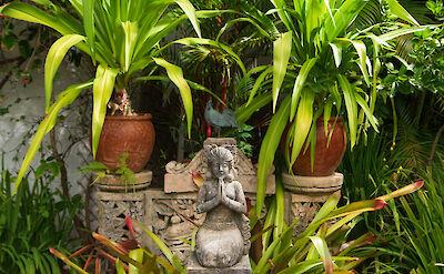 Mahogany Hill Princess With Planting