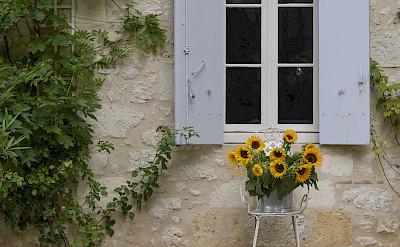 Exterior Flowers 2
