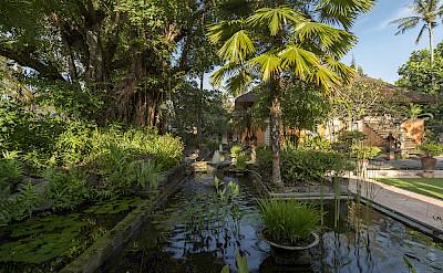 Villa Entrance Water Garden At Dawn