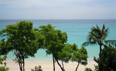 Coral Cove View Web