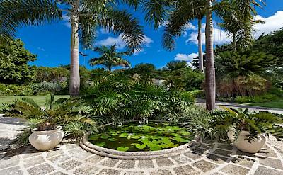 Sandy Lane Dec Liliy Pond At Front Detail